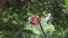 workers pruning trees - stock footage