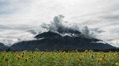 Timelapse of mountain with dramatic clouds and sunflowers Stock Footage
