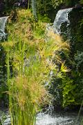 papyrus and waterfall in a urban park - stock photo