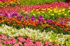 Close-up view of flower bed Stock Photos