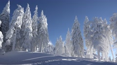 Beautiful winter landscape, fir trees full of snow, serene blue sky, sunny day Stock Footage