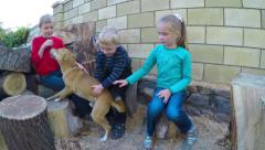 Three happy children are playing with a stray dog. Stock Footage