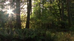 Sunlight Dancing Through Forest Trees Stock Footage