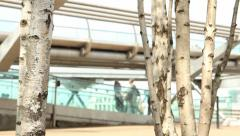 Millennium Bridge in background with silver birch trees in foreground Stock Footage