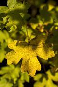 Fallen beautiful colorful autumn leaves - stock photo