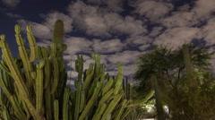 Desert Cacti Timelapse - stock footage