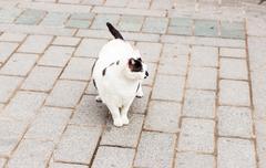 Obese cat looking toward hidden snacks in lawn Stock Photos
