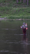 Fly fisherman in beautiful river in Yellowstone Park vertical HD Stock Footage