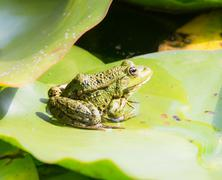 Green frog sitting on a leaf Stock Photos