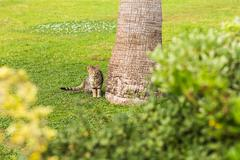 Cute  Cat  Sitting In Grass - stock photo