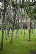 Many palm trees on the bright green grass background. Stock Photos
