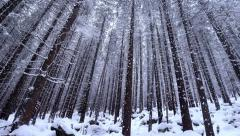 Snow covered fir trees in mountains with snowfall Stock Footage