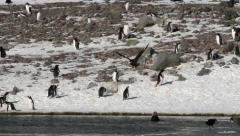 Penguins and Giant Petrel Stock Footage