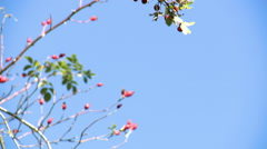 Hawthorn branch with berries against a blue sky Stock Footage