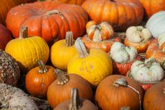 Pumpkins background for the autumn season and Halloween - stock photo
