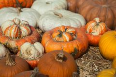 Pile of pumpkins. Background for the autumn season and Halloween - stock photo