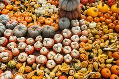 Background made of bright colorful pumpkins for the autumn season and Halloween Stock Photos