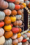 Pile of colorful pumpkins. Background for the autumn season and Halloween - stock photo