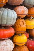 Lots of colorful pumpkins. Background for the autumn season and Halloween - stock photo