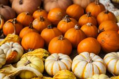 Stock Photo of Pile of pumpkins. Background for the autumn season and Halloween