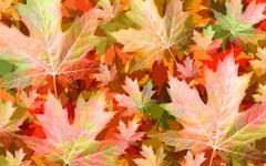 Autumn Leaf Concept Stock Illustration