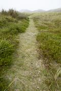 Amrum (Germany) - Path through grass-covered sand dunes Stock Photos
