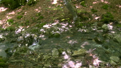 River cutting through a beech forest, pan left Stock Footage
