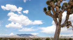 Nevada tree desert timelapse Arkistovideo