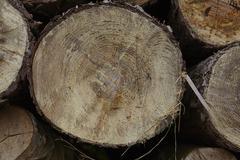 Amrum (Germany) - Pile of tree boles Stock Photos