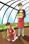 Planting in greenhouse Stock Illustration