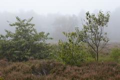 Amrum (Germany) - Landscape at fog Stock Photos