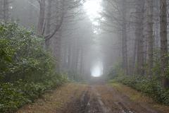 Amrum (Germany) - Forest path at fog - stock photo