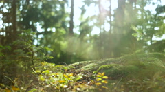 Calm Tranquil Forest Scene - stock footage