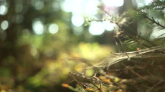 Spider Web in the Wind Stock Footage