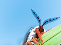 Front view of orange, white and brown giant silk moth on green grass Stock Photos
