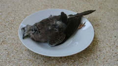 Dead bird on a dish Stock Footage