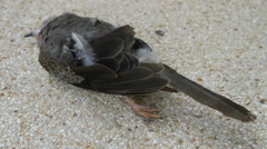 Dead bird Stock Footage