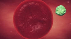 Virus infected cell, virus replication in the cell, virus replication in the liv Stock Footage