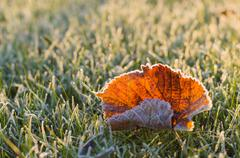 Fallen autumn leaf on frosty grass in sunny morning light - stock photo