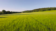 France Countryside Aerial very low over wheat fields in Puimoisson commune - stock footage