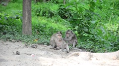 Monkey on tree at Pong Krathing Hot Spring - stock footage