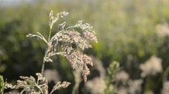 Beautiful crystal grass with dew Stock Footage