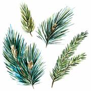 Raster watercolor fir-tree branches - stock illustration