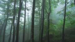 silhouettes of tall trees shrouded in fog - stock footage