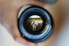 Horses through the lens Stock Photos