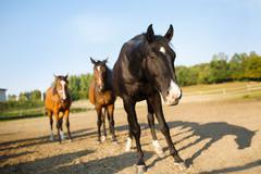 Herd of a horses - stock photo