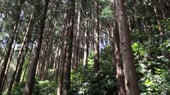Long narrow line of trees Stock Footage