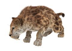 Big Cat Sabertooth - stock illustration