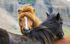 horse love, on the medow - stock photo