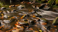 Natural fresh water flowing over rocks autumn colors outdoors - stock footage